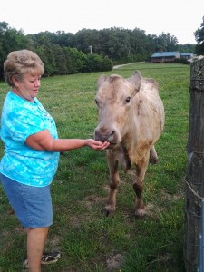 Sweetie, enjoying a little attention from Mary Ann.
