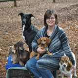 Jodi, relaxing with her rescue dogs.